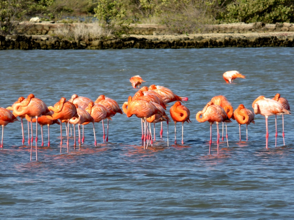 photo Flamingos-curacao.jpg
