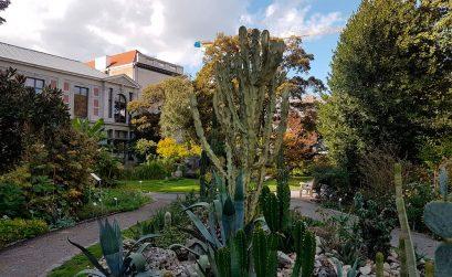 Plantentuin Antwerpen Den Botaniek